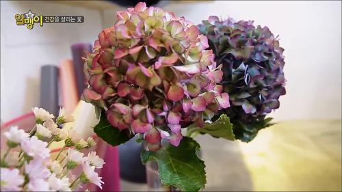건강을 살리는 꽃