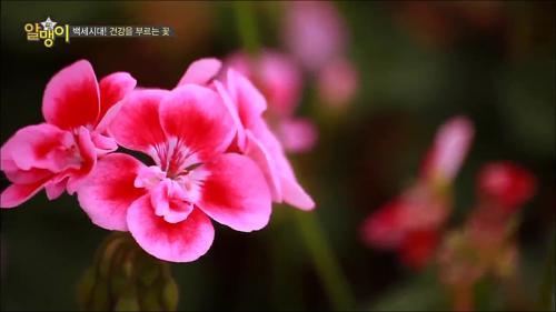 백세시대! 건강을 부르는 꽃