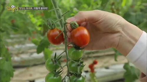 맛있는 토마토, 이렇게 골라라!