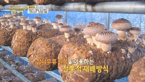무농약 최고의 품질 '표고버섯'을 키우다!