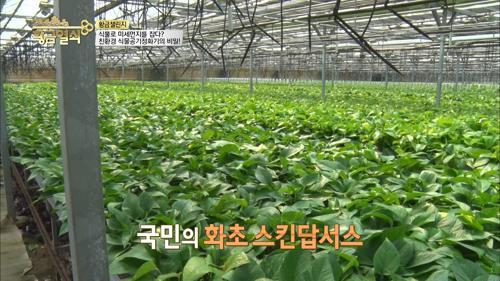 간단한 방법으로 사용하는 친환경 식물공기정화기!