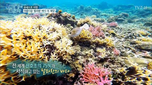 세계에서 가장 아름다운 팔라완 바다 속 세상!