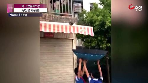 '우산을 거꾸로'...길냥이 구한 中 초등학생 화제