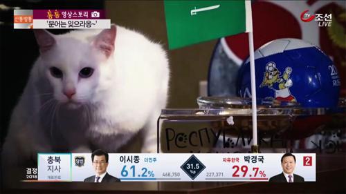 '문어는 잊으라옹'...러시아개막식 우승팀 예언한 고양이