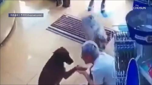 '발을 다쳤어요'…약국 찾아온 떠돌이 개
