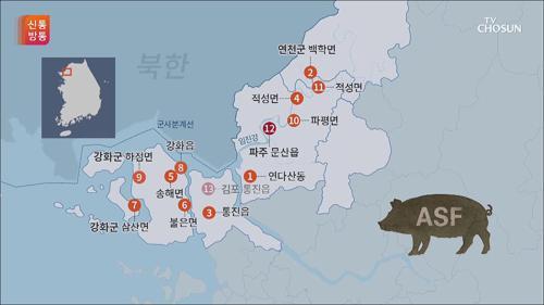 北에서 유입?...DMZ 멧돼지에서 돼지열병 확진 판정