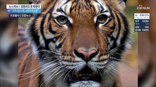 뉴욕 동물원 호랑이도 코로나 감염…세계 최초
