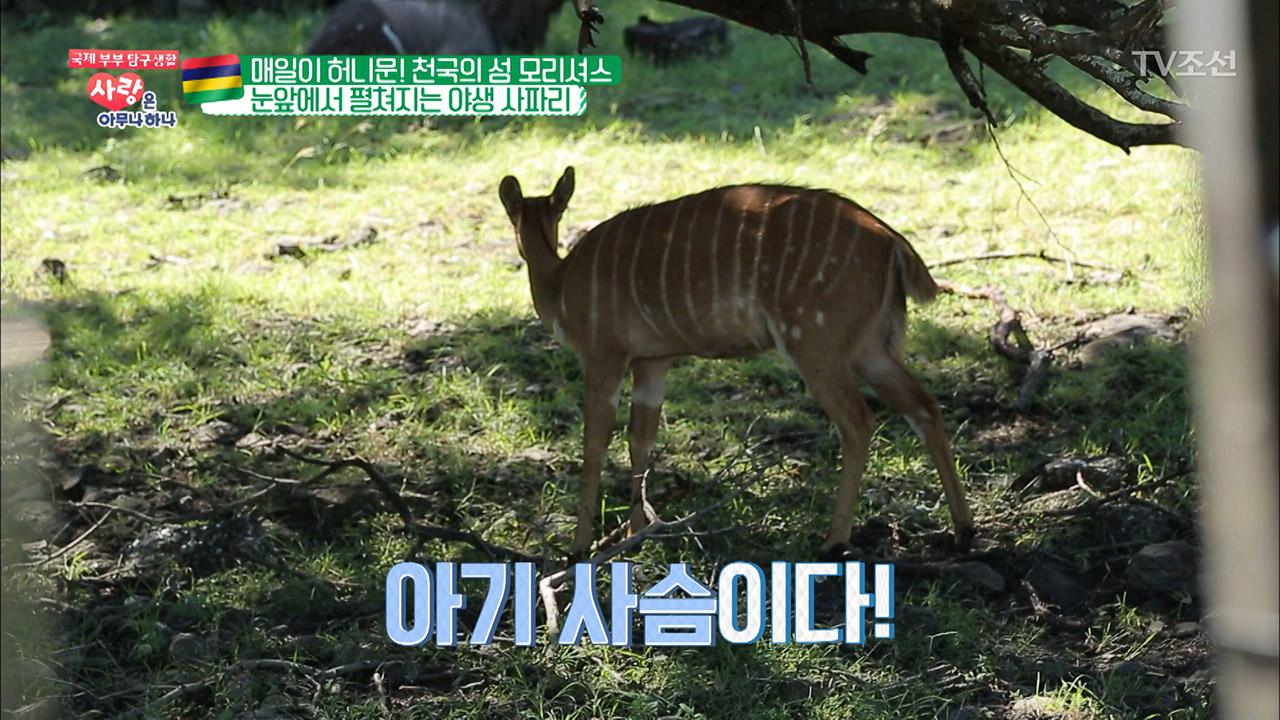 눈앞에 아기사슴이?! 생생하게 펼쳐지는 야생 사파리!