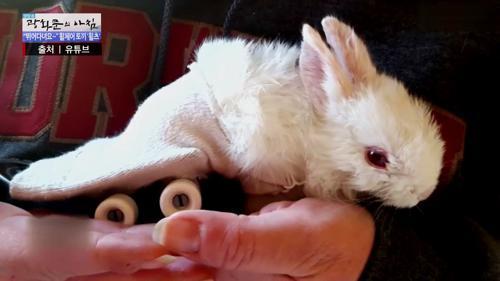 휠체어 탄 토끼 '휠츠'