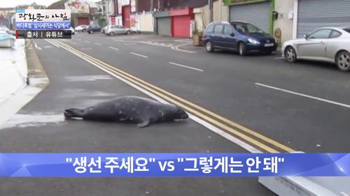 생선찾으러 도로에 등장한 '바다표범'!