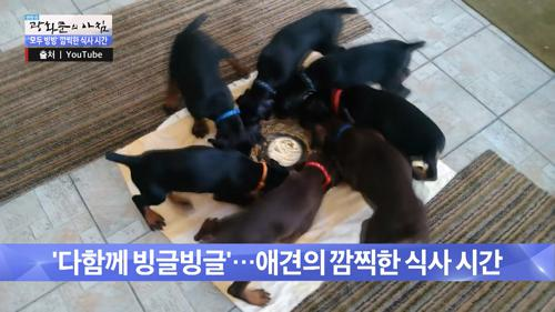 빙글빙글 돌며 밥을 먹는 귀여운 강아지들!