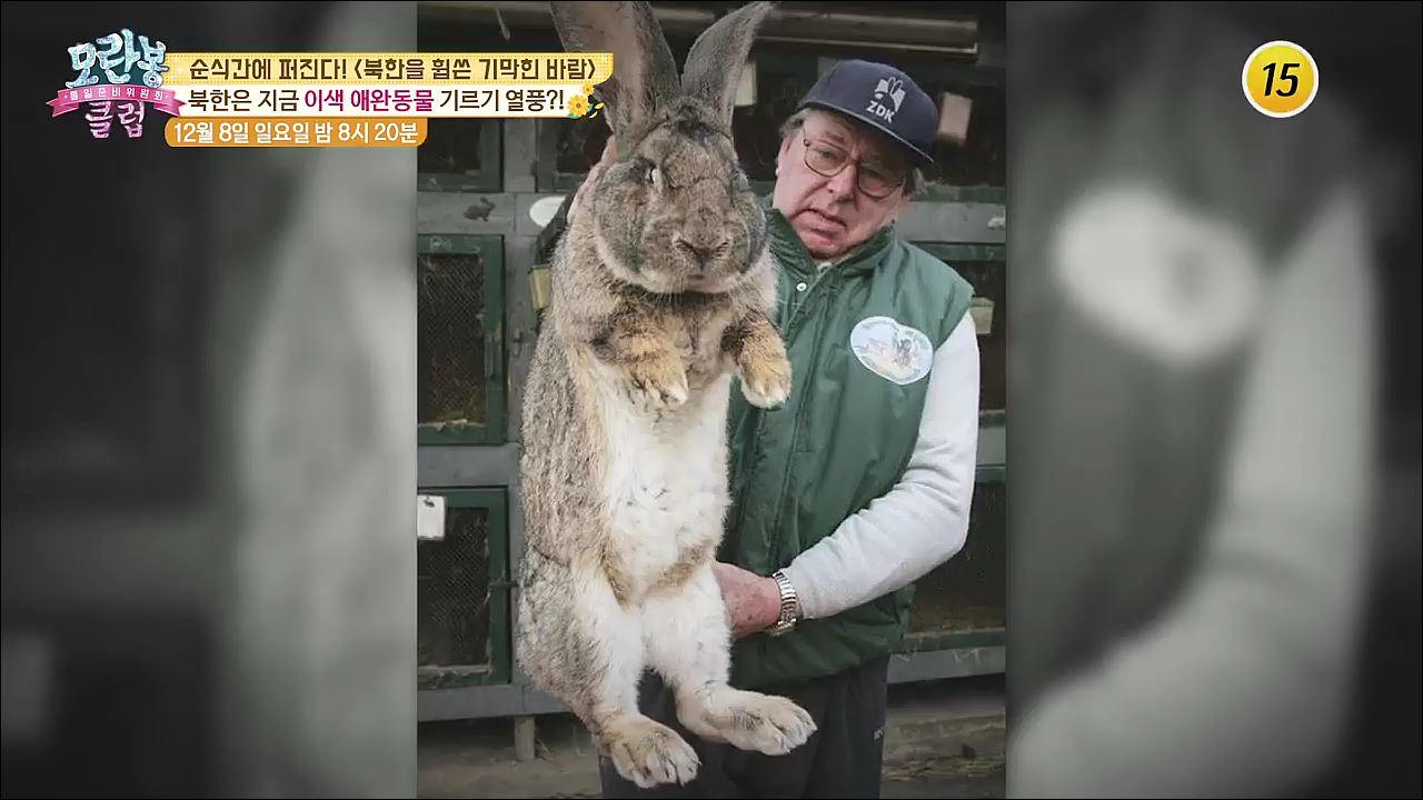 북한을 휩쓴 애완동물 열풍_모란봉 클럽 217회 예고 이미지