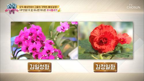 제일 피우기 힘든 꽃! 순간 까맣게 변하는 꽃잎..?