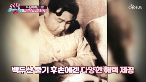 생사 까지 바꿀 수 있는 특권 ✧백두산 줄기✧ TV CHOSUN 210131 방송