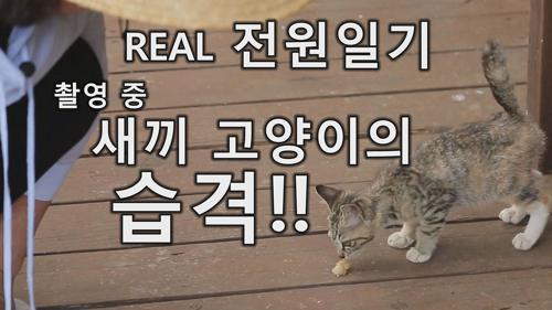 [미방영] REAL 전원일기 촬영중 새끼 고양이의 습격!!