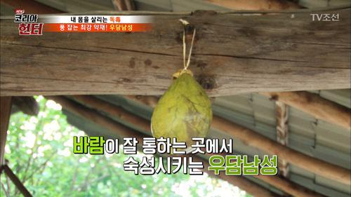 풍 잡는 최강의 약재 '우담남성' 만들기!