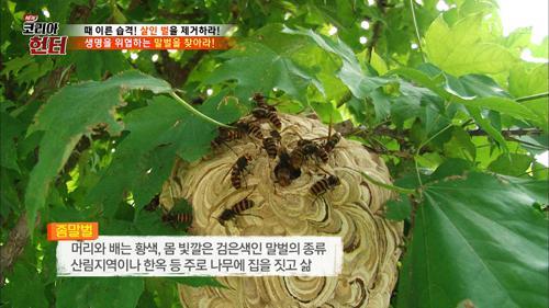 처마 밑에 숨어있는 좀말벌집을 발견!