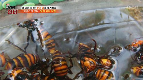 이만기, 말벌 퇴치 작업! 성난 벌들!