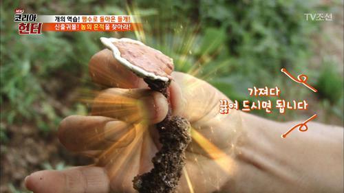 들개 찾다가 영지버섯을 발견한 제작진