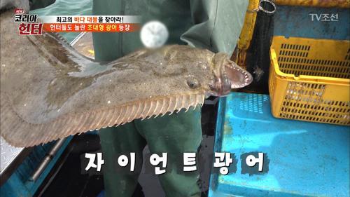 [약혐] 어선에 등장한 자이언트 초대형 광어