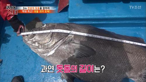이게 진짜 '돗돔'이다! 1m 43cm?! 엄청난 크기의 돗돔