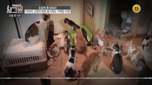 70마리 고양이 떼와 동거하는 상속녀_시그널 34회 예고