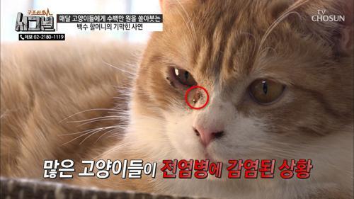 피를 토하는 고양이들! 곰팡이 균에 의한 감염?