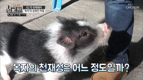 돼지 '옥자'의 천재성은 어느 정도?